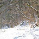 slavonia region of croatia hiking in papuk geopark