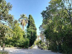 walking in trsteno arboretum close to dubrovnik croatia