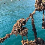 oyster tasting day tour in dubrovnik croatia