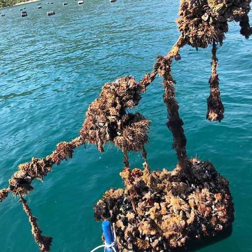 oyster tasting day tour dubrovnik croatia