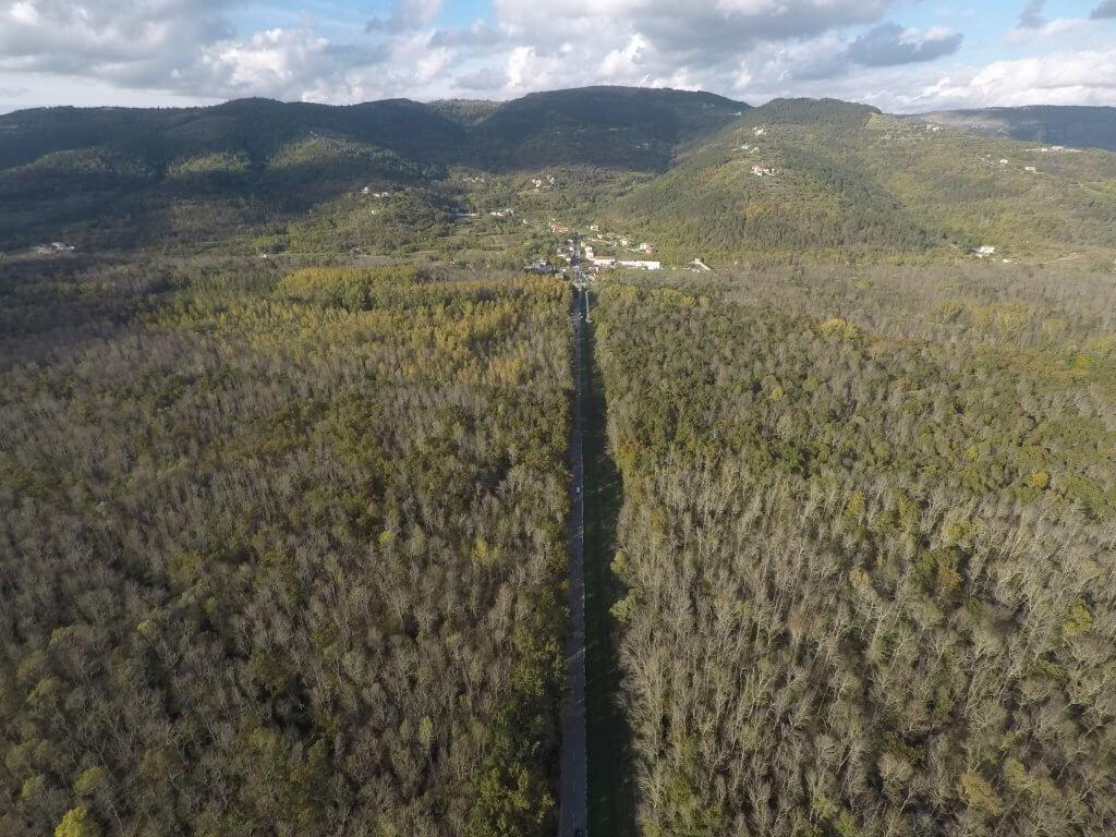motovun forest in istria region